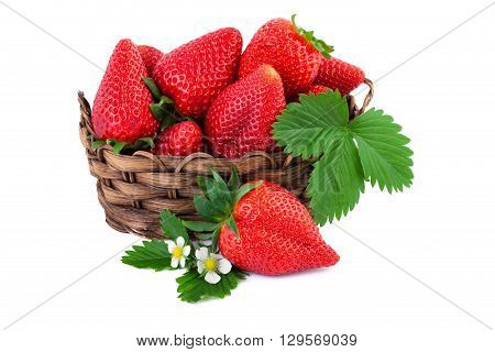 Strawberry fresh organic strawberries with leaves in wicker basket isolated on white background.