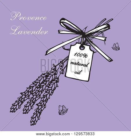 Vintage hand drawn lavender vector illustration isolated on violet background. Engraving illustration. Lavender herbal bouquets and label in vintage style