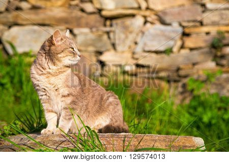 Cat sitting on a garden stone looking intently back over its shoulder as it watches something profile view