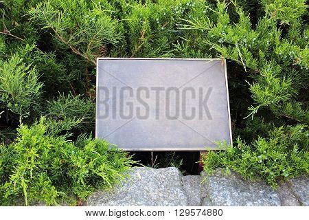 rectangular empty iron plate on a green fir-tree background
