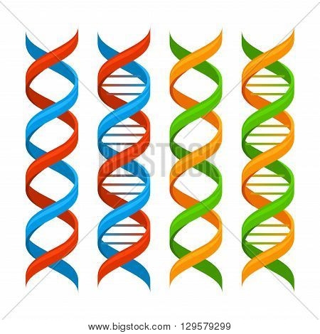 DNA Genome Molecules Set on White Background. Vector illustration