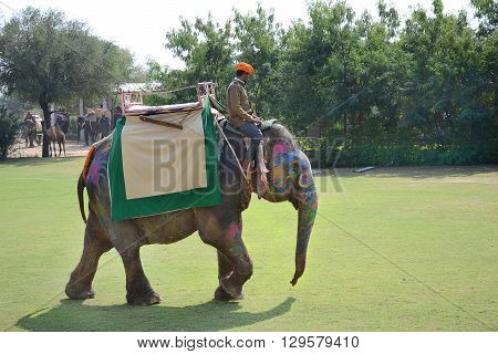 JAIPUR INDIA - NOVEMBER 13 2015: Dera Amer Elephant Safari Elephant Polo. The camp is run by a local family and operates out of their ancestral home.