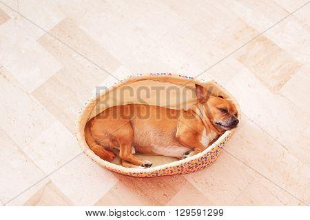 Sleeping Puppy In A Basket