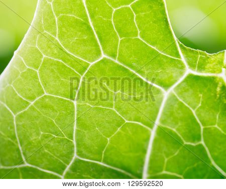Macro shot of green leaf showing its natural pattern