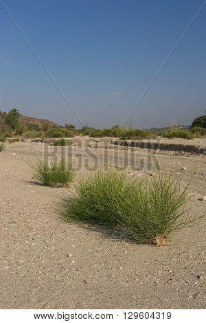 Mojave Desert Dry Wash