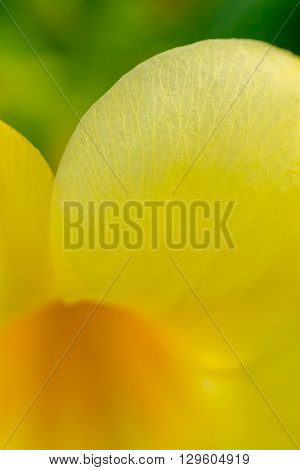 Macro detail of the veins in the petals of a yellow flower.