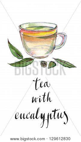Eucalyptus leaves and herbal tea hand drawn - watercolor Illustration