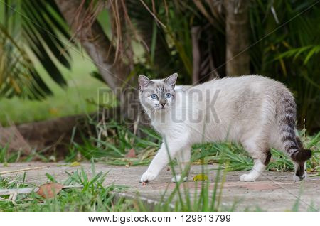 Cute Cat With Blue Eyes Playing Around