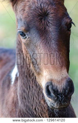 A Head Shot Of A Little Foal