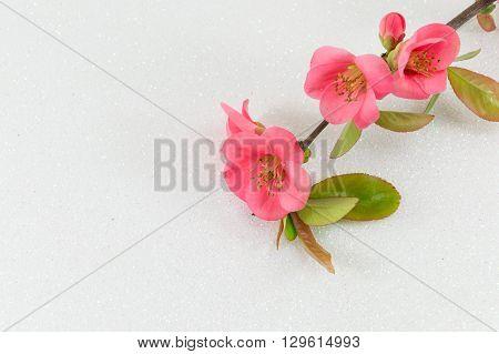 Japanese Rose Flowers