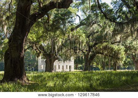 Live oak trees and ruins in Americas deep south
