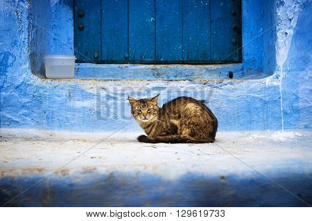 A cat in front of a door in Chefchaouen Morocco.