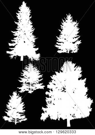 illustration with fir tree silhouettes isolated on black background