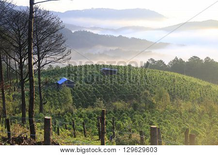 coffee plantation in Dalat, Vietnam. Great coffee
