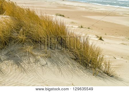 The Grass On The Sand
