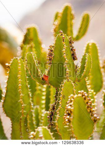 Desert Cactus Detail