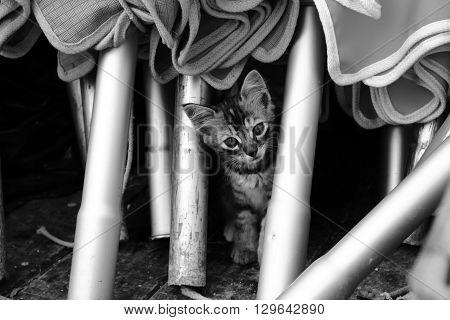 Gattino carino tra gli ombrelloni in spiaggia