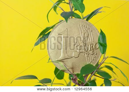 Ficus  And One Euro Coin On A Yellow  Background