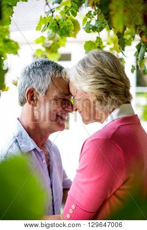 Close-up of happy senior couple standing face to face at yard
