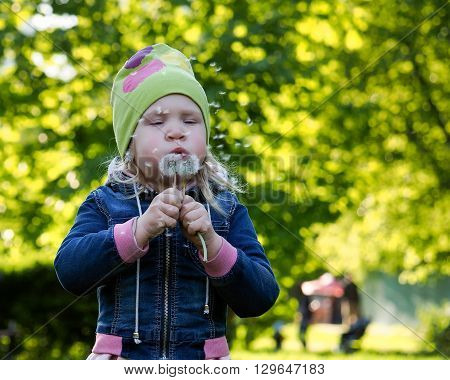 Funny child and dandelion seeds. Baby in a denim jacket and hat. Walk in the park