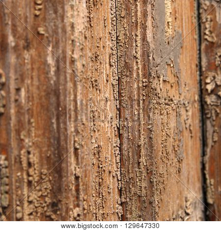 Natural wooden texture closeup view. Pattern of wood with corrosion