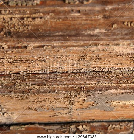 Wood with corrosion natural pattern. Wooden table texture perspective view