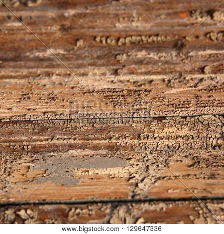 Wooden surface texture. Wooden pattern with corrosion natural photo background