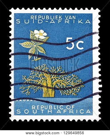 SOUTH AFRICA - CIRCA 1961 : Cancelled postage stamp printed by South Africa, that shows Baobab tree.