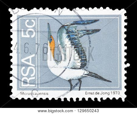 SOUTH AFRICA - CIRCA 1974 : Cancelled postage stamp printed by South Africa, that shows Cape Gannet.