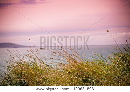 Pink sky with the sun setting over the sea and long green grass in the foreground
