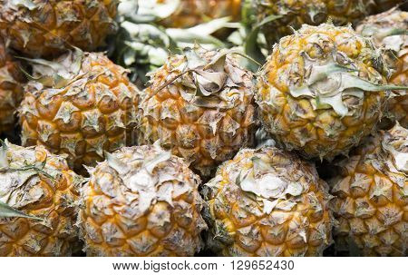 Close up of tropical pineapple for sale by vendor