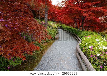 Fusion of spring azalea flowers and autumn maple leaves created with false red hues