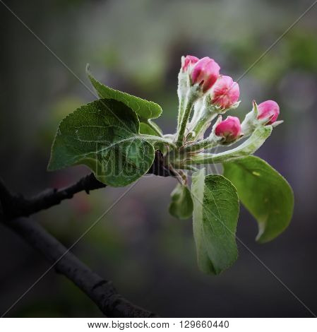 The beginning of spring is accompanied by the rapid flowering of fruit and other trees