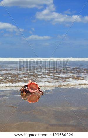 conch shell on the blurred background of the waves and blue sky