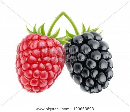 Isolated Raspberry And Blackberry