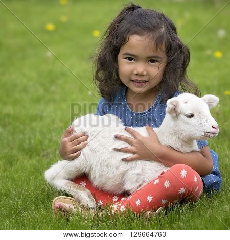 Young, Asian-American girl sitting on the grass, holding a baby lamb.
