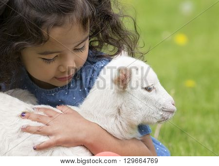 Young, Asian-American child holding a baby lamb