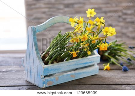 Beautiful narcissus in crate on the table
