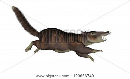 Cronopio dentiacutus prehistoric mammal running isolated in white background - 3D render