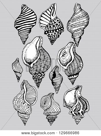 Stylized shell. Sea bottom. Shellfish. Line art. Black and white drawing by hand. Decorative. Zentangle. Set. Collection. Tattoo