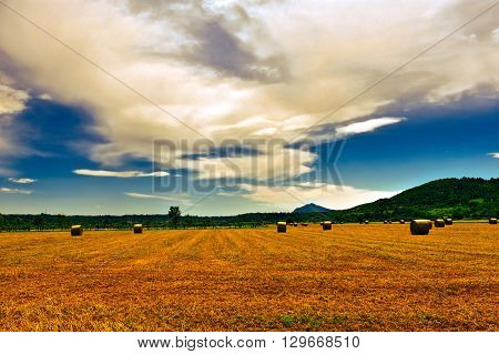 Landscape with Many Hay Bales and Vineyard Vintage Style Toned Picture