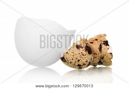 Shell of chicken and quail eggs isolated on white background