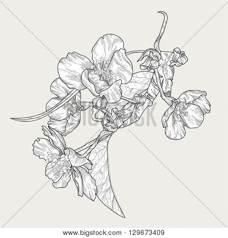 Blooming plum tree hand drawn vector illustration.Retro vintage doodle.