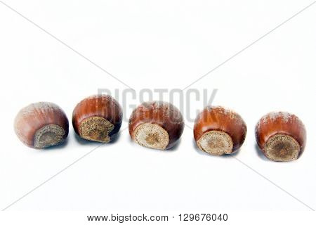Five hazelnuts closeup isolated on white background