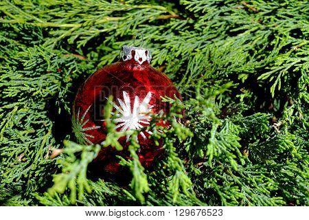 Red Christmas balls on green pine needles Santa Claus Christmas time