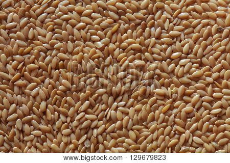 golden seeds of flax, flax seeds photo