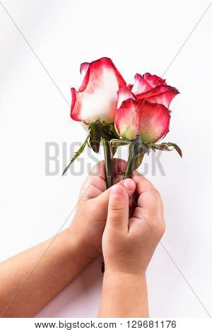 Children's hands holding two roses isolated on white background