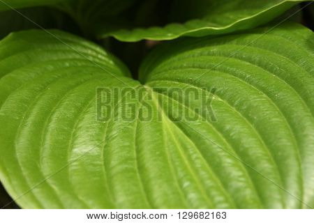 Green leaves background. Bright spring foliage high resolution wallpaper