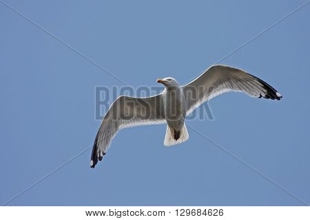 looking up at a seagull flying in a blue sky
