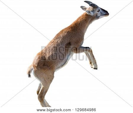 Close up photo of roe isolated on white
